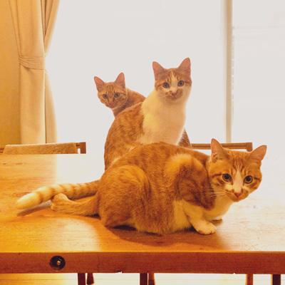 エグザイル3猫