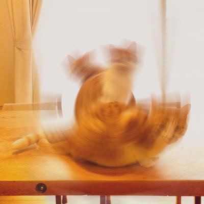 エグザイル3猫その2