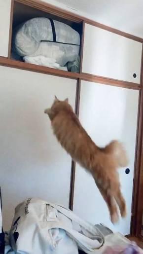 うに 猫 ジャンプ失敗