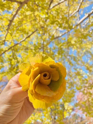 桜 イチョウ 落ち葉 作る バラ 薔薇 シダーローズ 草花あそび研究所 inori