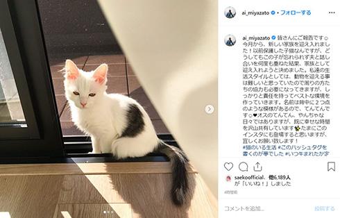 宮里藍 新しい家族 保護猫