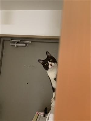 立ち上がって甘える猫ちゃん