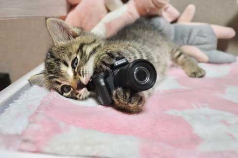 猫 カメラ