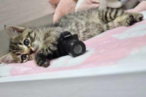 おもちゃ カプセルトイ ミニチュア カメラ 子猫 EOS Kiss M キヤノン Canon