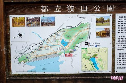 狭山公園に来ました