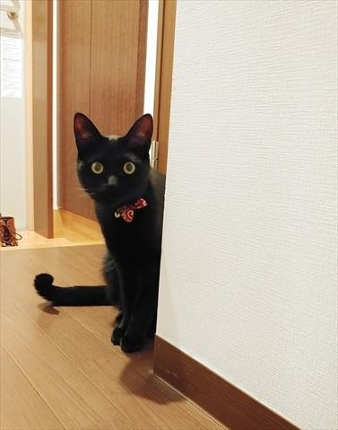 怒った黒猫