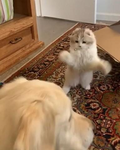 ambushing the dog