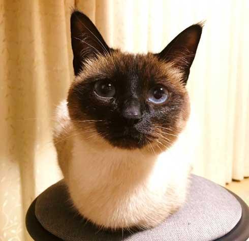 猫 君 ごみ箱 生ごみ 台所 あさった 犯人 排水口 カバー 首