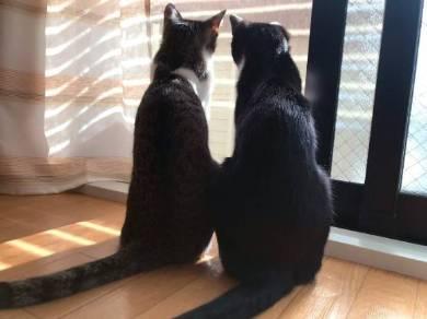 猫 ミファ君 目をつぶっちゃう