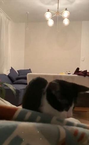 跳躍を極めた猫ちゃん