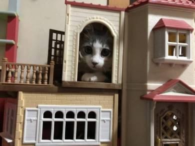 猫 シンバ君 カリカリ すっとぼけ