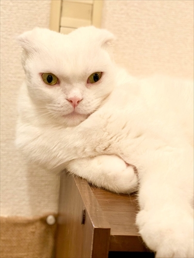 イメージがかわる猫ちゃん