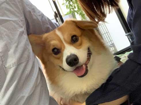 コーギー 面白い 表情 犬 なんやこいつら 顔 ラッキー