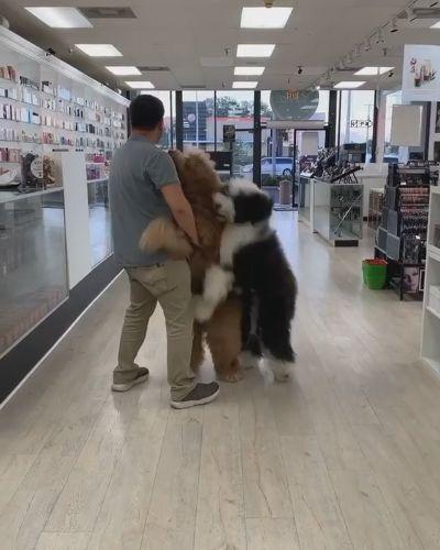 抱っこ大好きでかわんこ