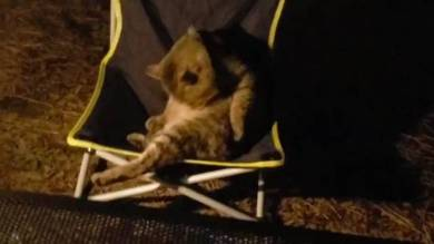 キャンプ 猫 キャブヘイ