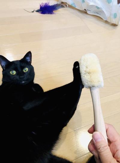 ブラッシング拒否黒猫