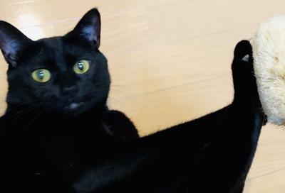 ブラッシング拒否黒猫アップ