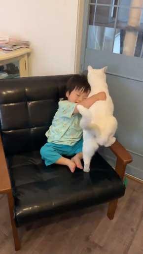 猫 子守 シッター プロ 椅子 テーブル 上がる 子ども 息子 ガード 賢い
