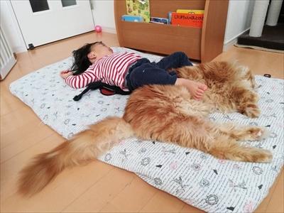 大きい猫ちゃん