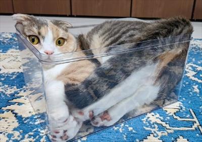 猫は液体ポーチ