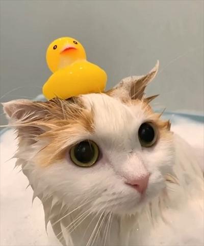 お風呂に入る猫ちゃん