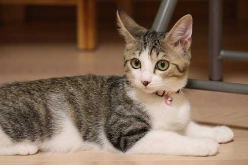 猫 なる 遊び かわいい 飼い主 足の間 飛び出す 子猫 保護 成長
