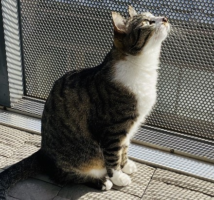 ペット手帳 猫 動物病院