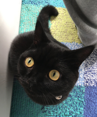 猫目なちゃちゃさん