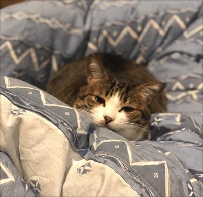 モフモフの猫ちゃん