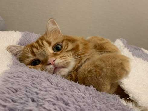 猫 ちくわ ちゅ〜る おやつ ハミ毛カット 爪切り 頑張る お利口さん