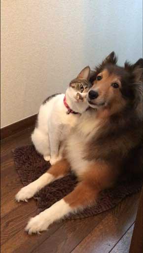 犬と猫イチャイチャ
