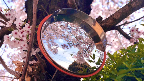 日本の四季 綺麗 写真 桜の木 カーブミラー 季節 春夏秋冬 慧人