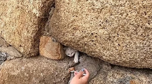 子猫ちゃん救出大作戦