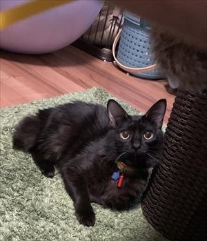 ふわふわのエリザベスカラーをつけた猫ちゃん