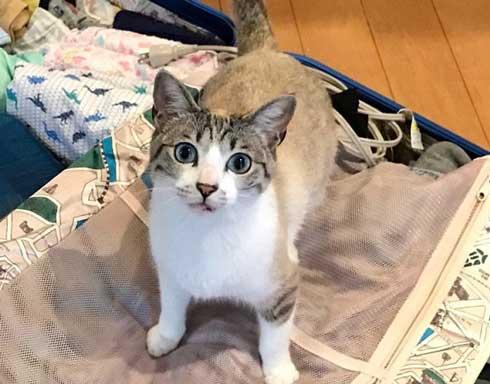 猫 帰省先にネコ  痕跡を探る 浮気を疑う 問い詰める 視線 におい なみそ