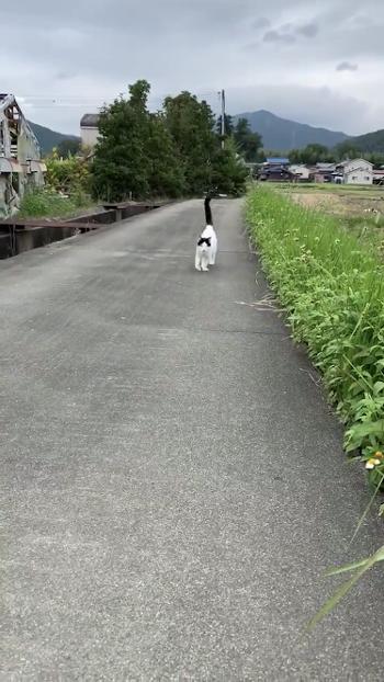 あぜ道を歩く猫