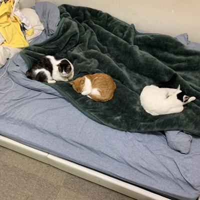 ベッドの上に3猫ちゃん面
