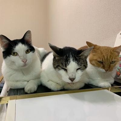 並ぶ3匹の猫ちゃん正面
