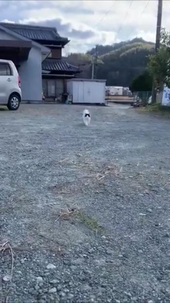 走ってくる猫1