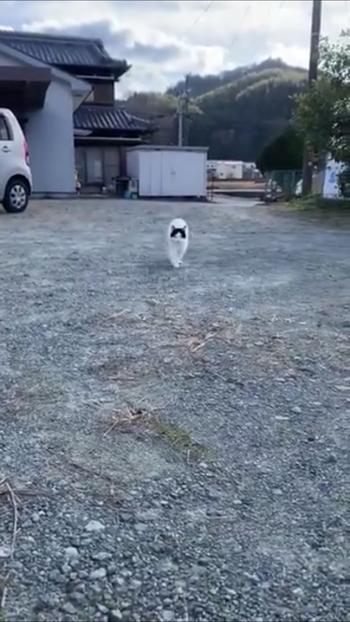 走ってくる猫2
