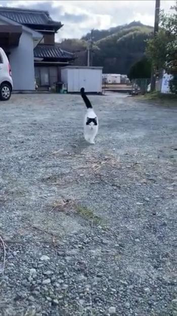 走ってくる猫3