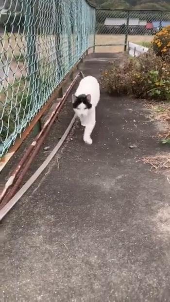 フェンスの横を走ってくる猫1