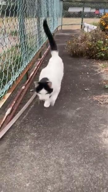 フェンスの横を走ってくる猫2
