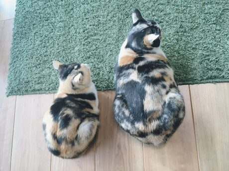 同じ日生まれ 姉妹猫