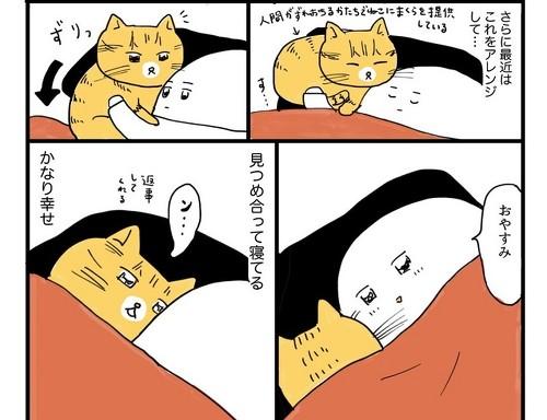 ねこと飼い主の寝方