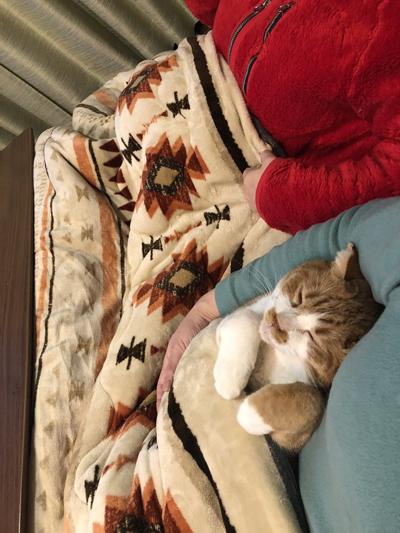 こたつで寝る猫・目閉じ