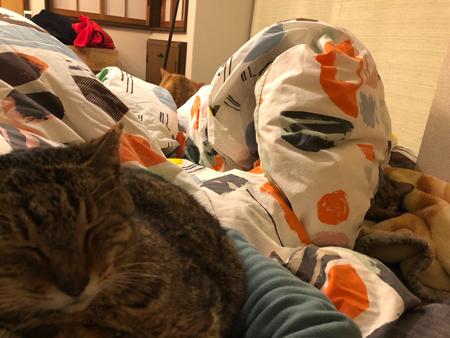 猫が生えるお布団