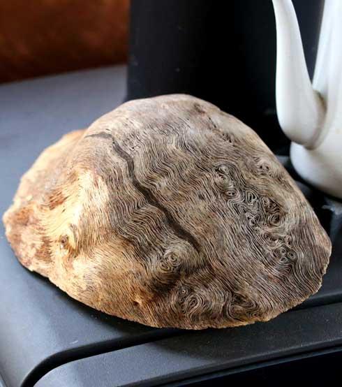 アトリエpuchuco 薪 樹 コブ 年輪 綺麗 美しい 不思議