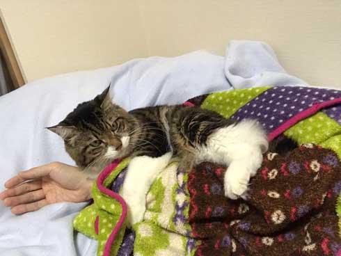 猫 ヤマダ 気が抜けそうな声 腕 ハグ 抱きしめる ラブラブ 飼い主 カネキリカ