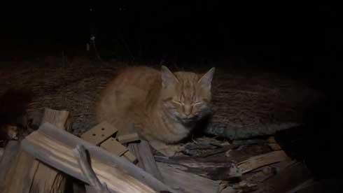 まつぼっくり 持ってくる 猫 キャンプ ソロキャン たき火 交流